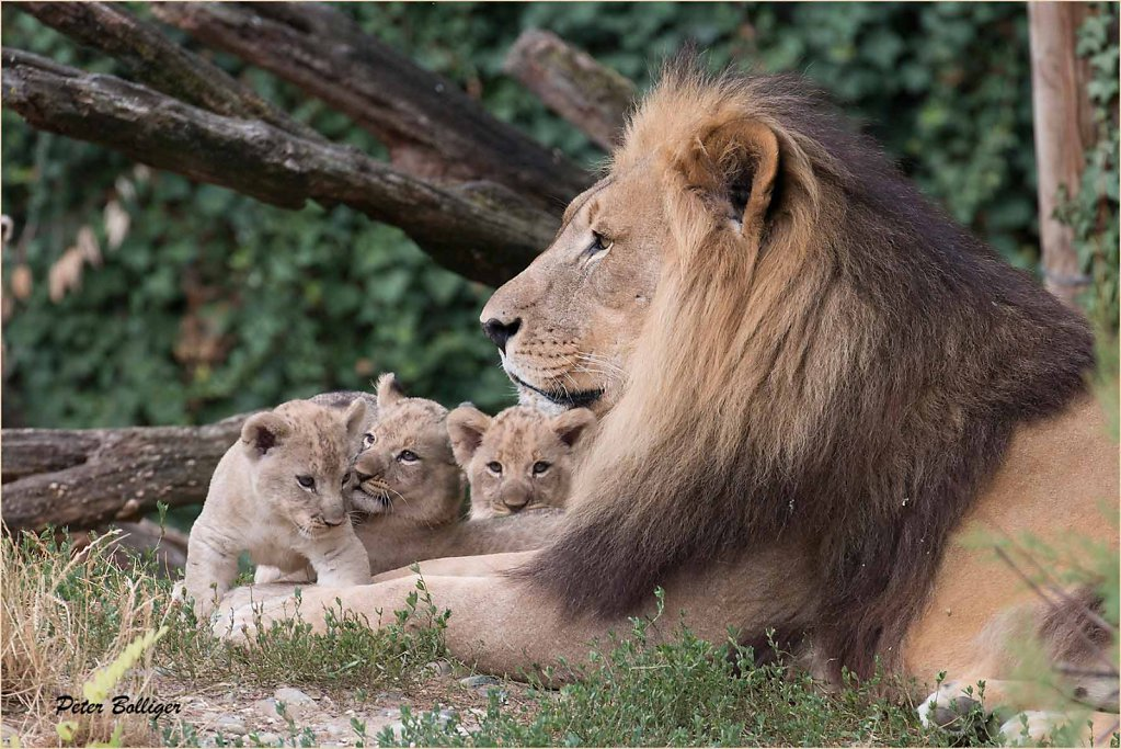 Mbali with his 3 sons - July 2015