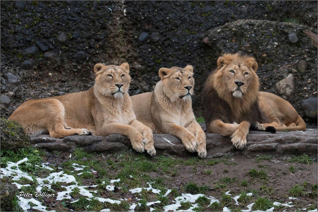 Radja and his girls - January 2016