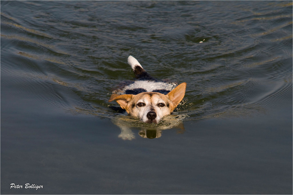 she is a good swimmer