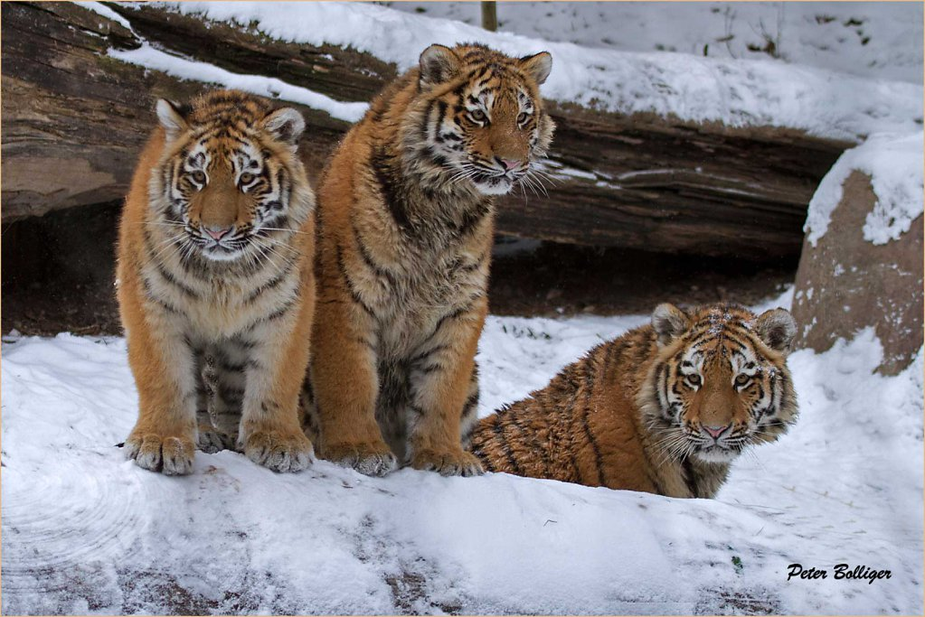The 3 youngsters - February 2012