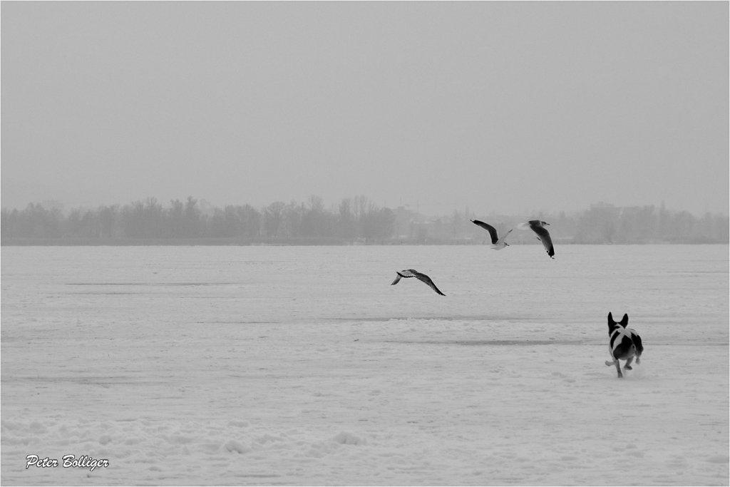 on the frozen Pfäffikersee