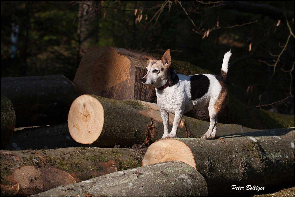 climbing on logs