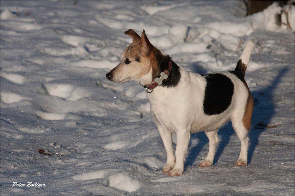 My Dog Joya