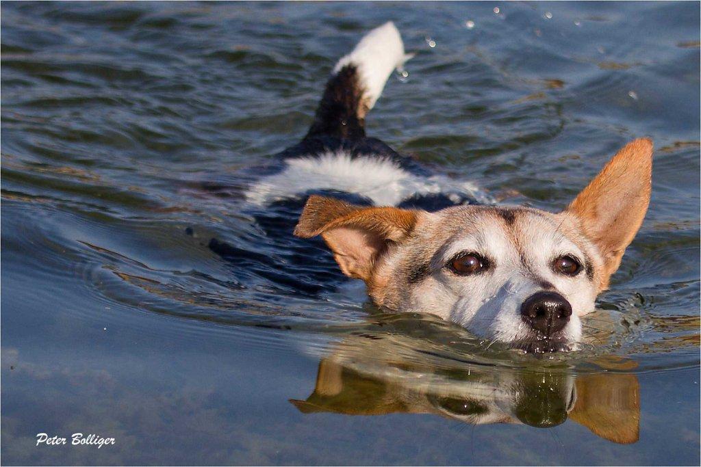 focused on swimming