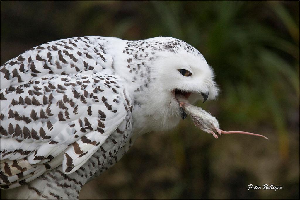Birds/Vögel