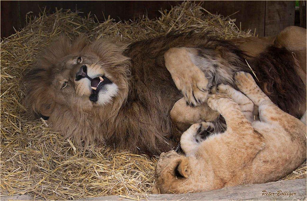 Dad is ticklish - June 2016