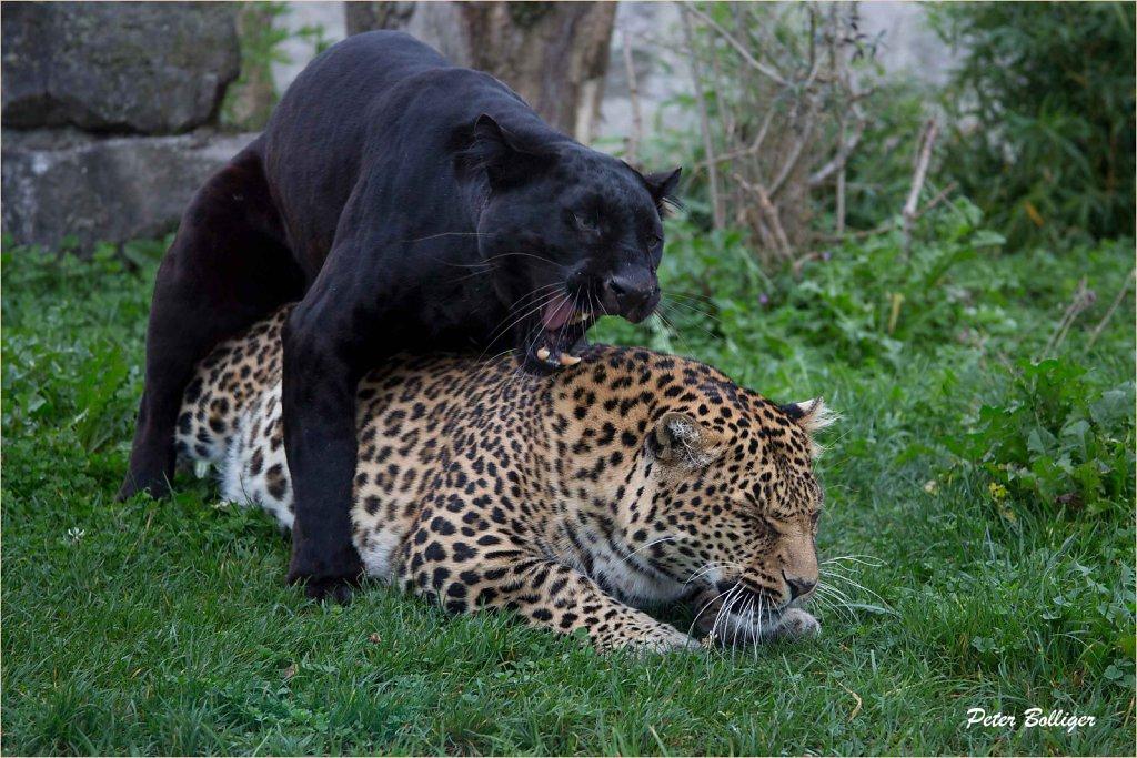 Blacky and Leonie
