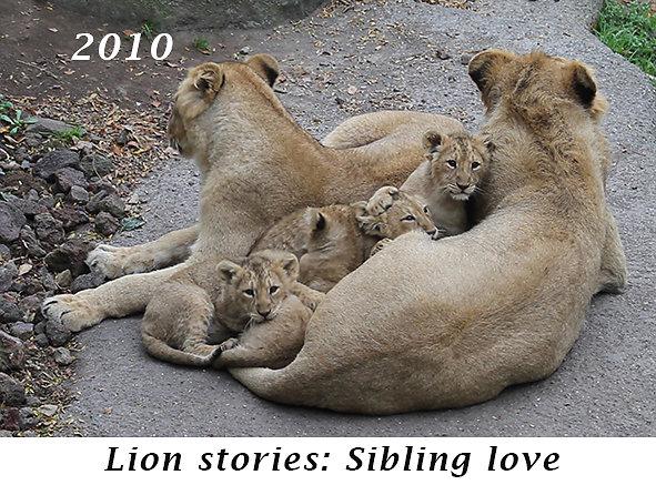 1010-Sibling-love.jpg