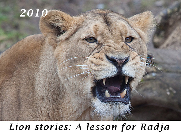 1012-A-lesson-for-Radja.jpg