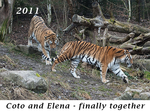 1101-Coto-and-Elena-finally-together.jpg
