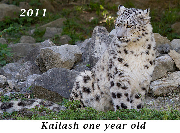 1105-Kailash-one-year-old.jpg