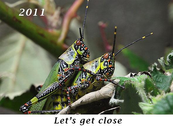 1106-Lets-get-close.jpg
