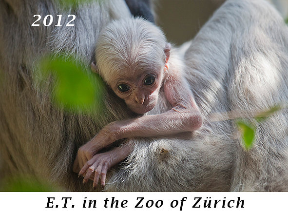 1204-ET-in-the-Zoo-of-Zuerich.jpg