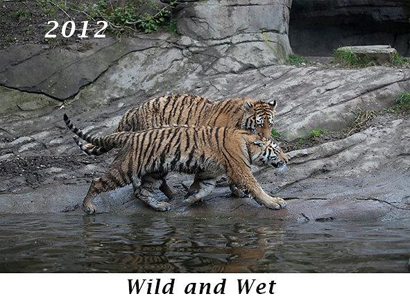 1206-Wet-and-wild.jpg