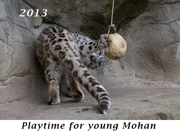 1305-Playtime-for-young-Mohan.jpg