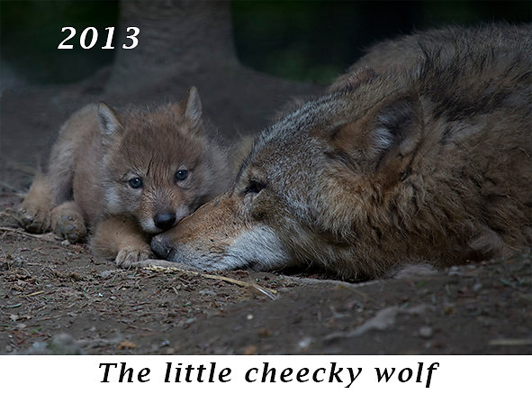 1306-The-little-cheeky-wolf.jpg