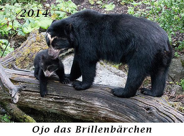 1407-Ojo-das-Brillenbaerchen.jpg