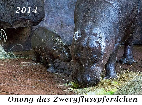 1407-Onong-das-Zwergflusspferdchen.jpg