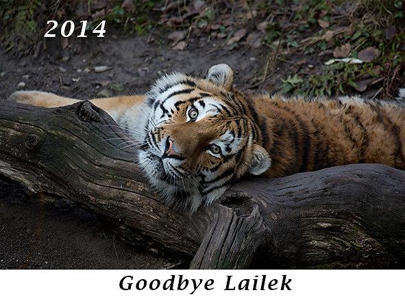 141-Goodbye-Lailek.jpg