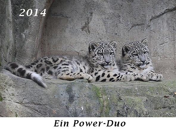 141110-Ein-Power-Duo.jpg