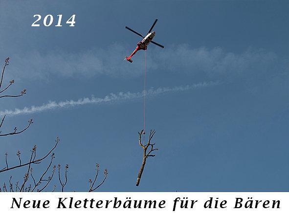 141125-Neue-Kletterbaeume-fuer-die-Baeren.jpg