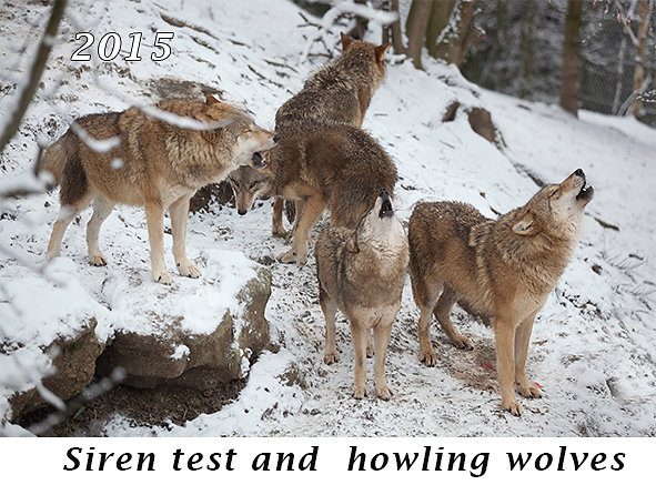 1502-Siren-test-and-howling-wolves.jpg