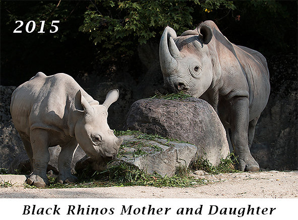 150927-Black-Rhinos-Mother-and-Daughter.jpg