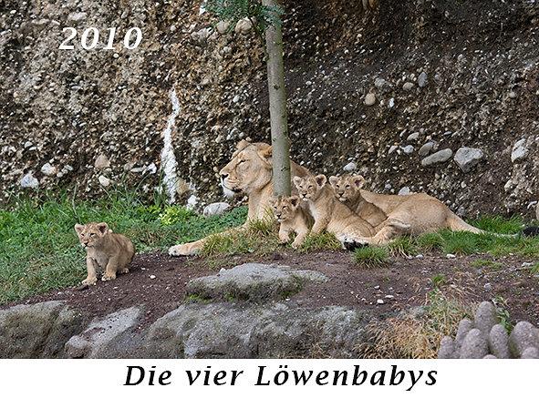 2010-Die-vier-Loewenbabys.jpg