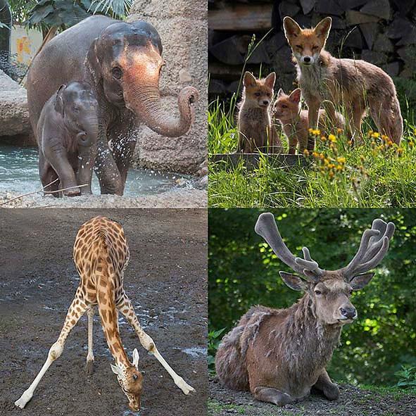Zoo-Infos-klein-5x5.jpg